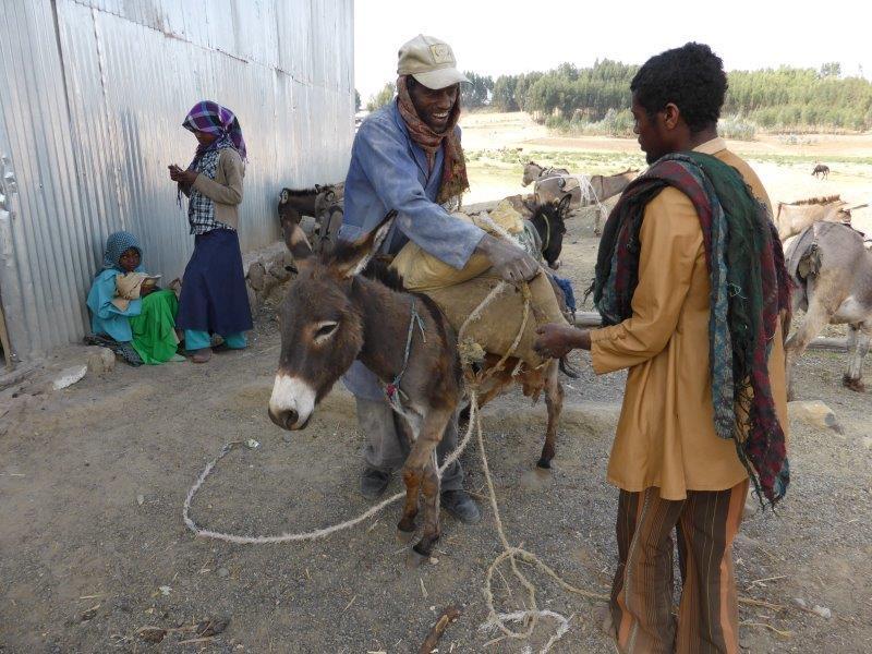 Homme en train de placer un sac sur le dos d'un âne