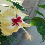 photo d'une fleur jaune et rouge